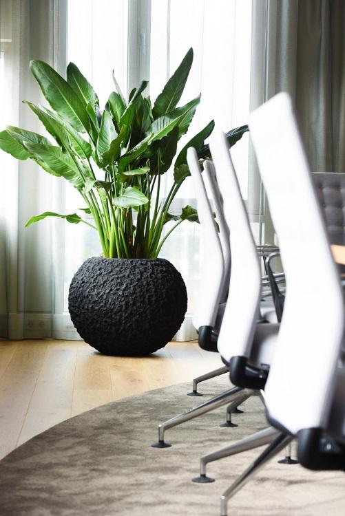 Hydrocultuurplant in lava plantenbak