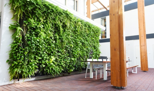 Plantenwand modern interieurbeplanting