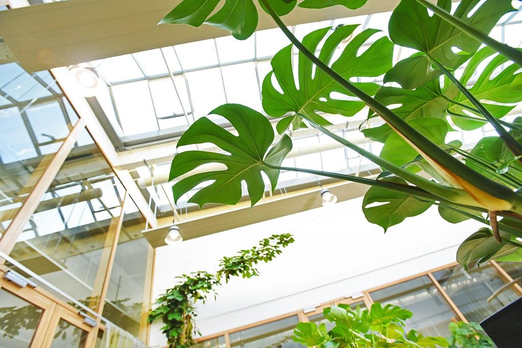 Interieurbeplanting_industrieel-natuurlijk-detail-1.jpg