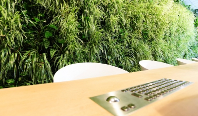Groene wand Interieurbeplanting