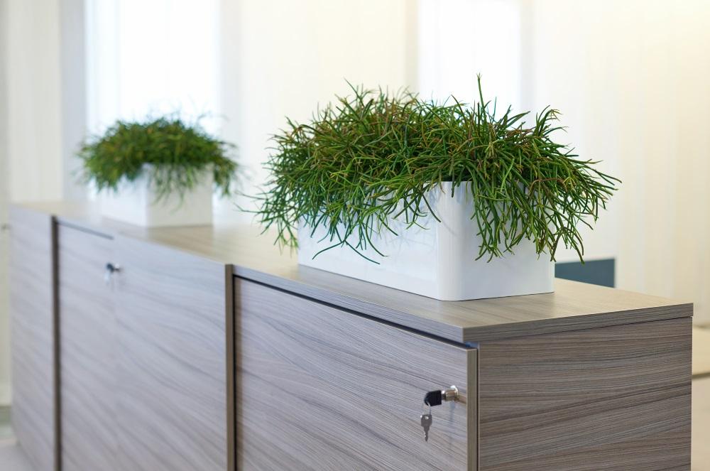 Interieurbeplanting_kantoor-op-kast_modern-strak_Ten-Brinke.jpg