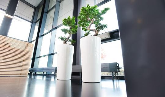Interieurbeplanting open kantoor modern strak