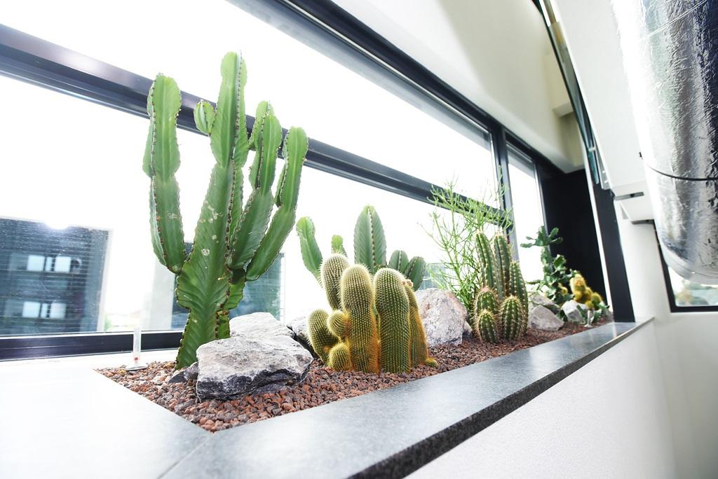 Natuurlijke-look-interieur-kantoor_ten-brinke-interieurbeplanting.jpg