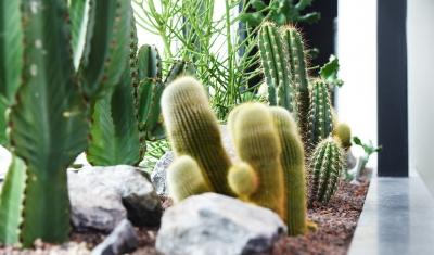Natuurlijke cactus look interieur kantoor interieurbeplanting