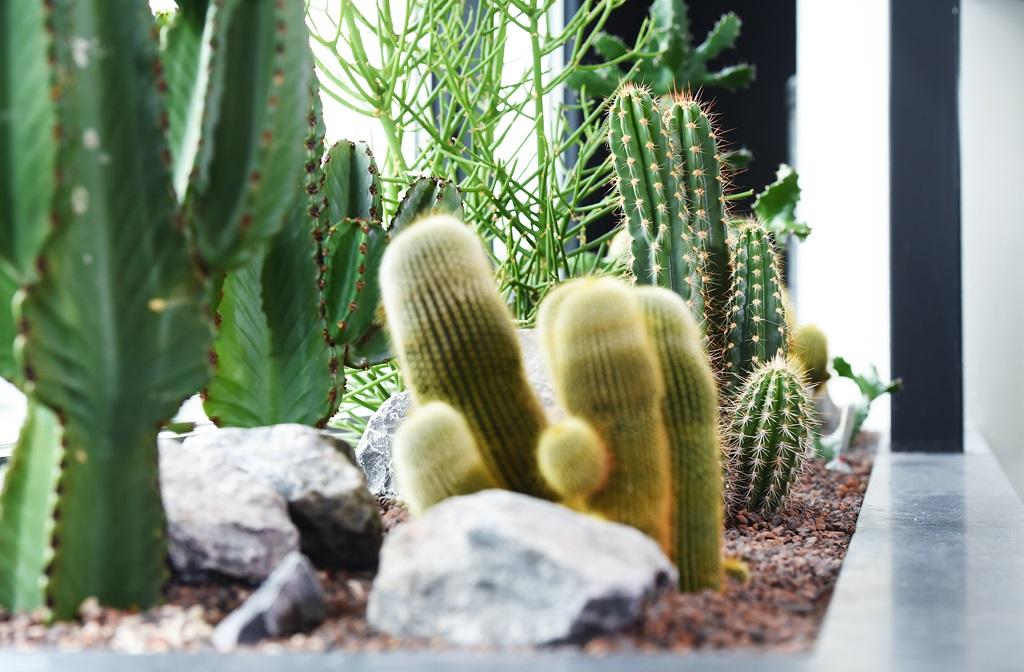 Natuurlijke_cactus-look-interieur-kantoor_ten-brinke-interieurbeplanting.jpg