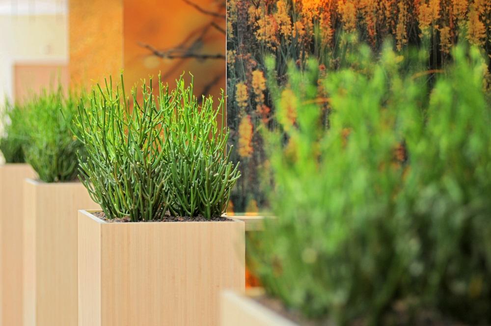 Natuurlijke_look-interieur_ten-brinke-interieurbeplanting.jpg