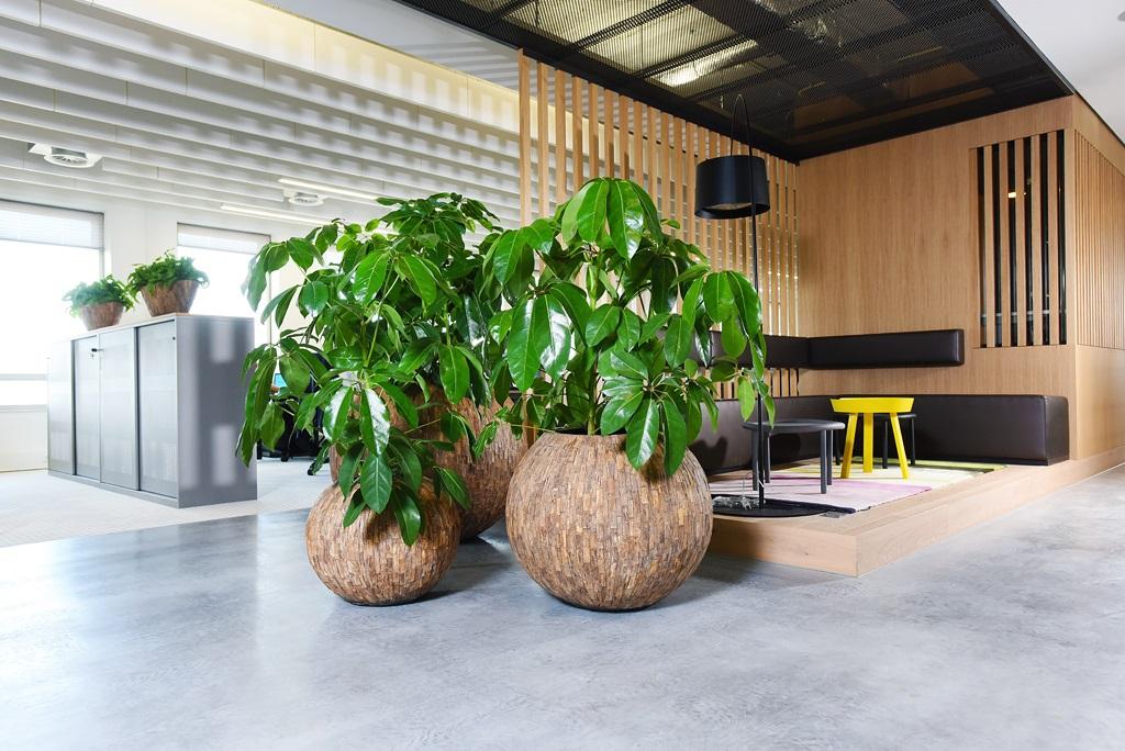 Natuurlijke_look-kantoor-amate_ten-brinke-interieurbeplanting.jpg