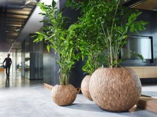 Natuurlijke look kantoor caryota interieurbeplanting