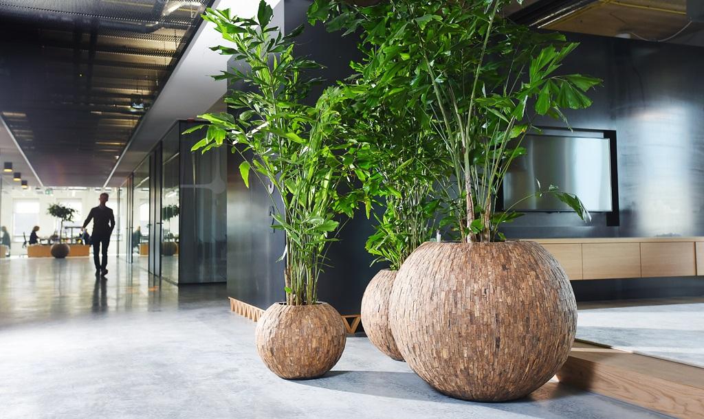 Natuurlijke_look-kantoor-caryota_ten-brinke-interieurbeplanting.jpg