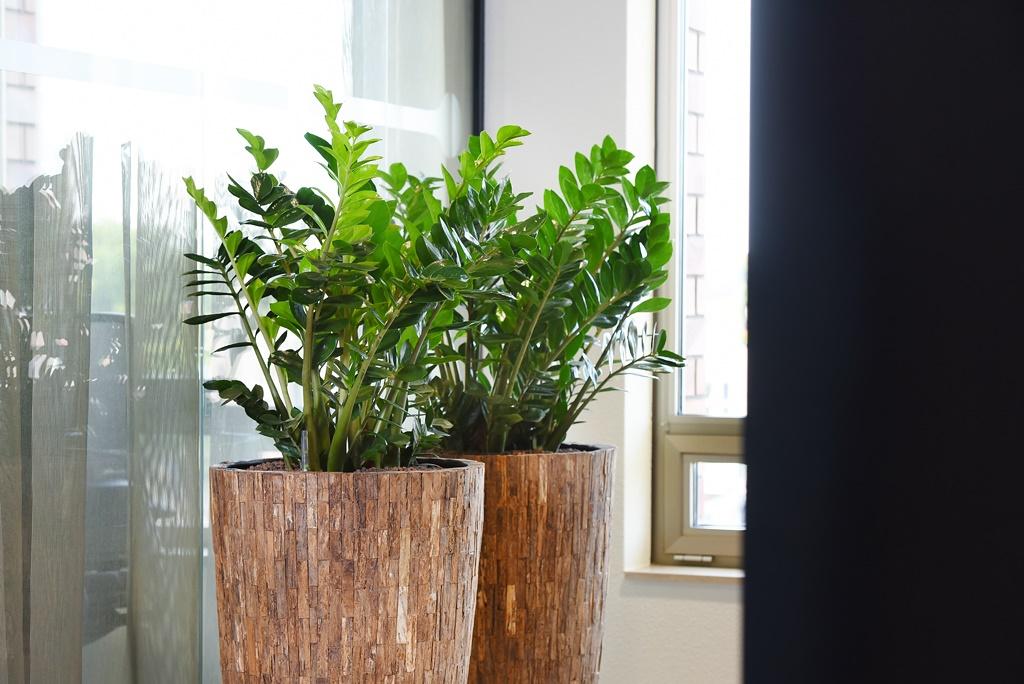 Natuurlijke_look-kantoor_ten-brinke-interieurbeplanting-1.jpg
