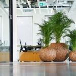 Natuurlijke look kantoor interieurbeplanting