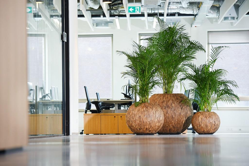 Natuurlijke_look-kantoor_ten-brinke-interieurbeplanting.jpg