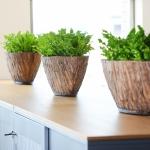 Natuurlijke look kast interieurbeplanting