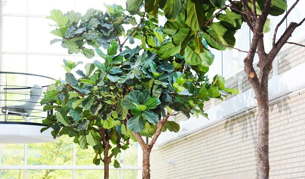 XL-planten-detail-interieurbeplanting.jpg