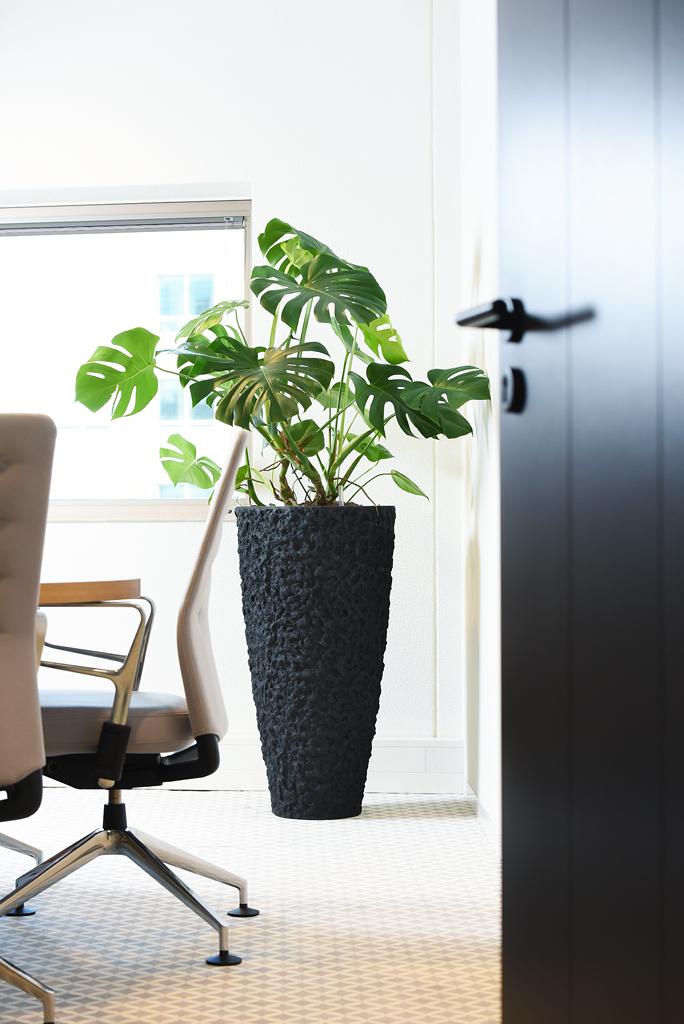 Hydrocultuur planten op kantoor