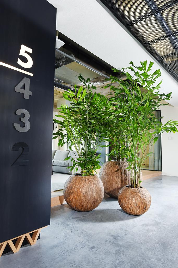 Natuurlijke kantoor planten inclusief plantenbak