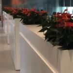 Plant anthurium op kast kantoor