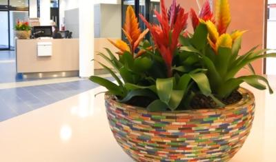 Planten schalen op receptie wisselbeplanting
