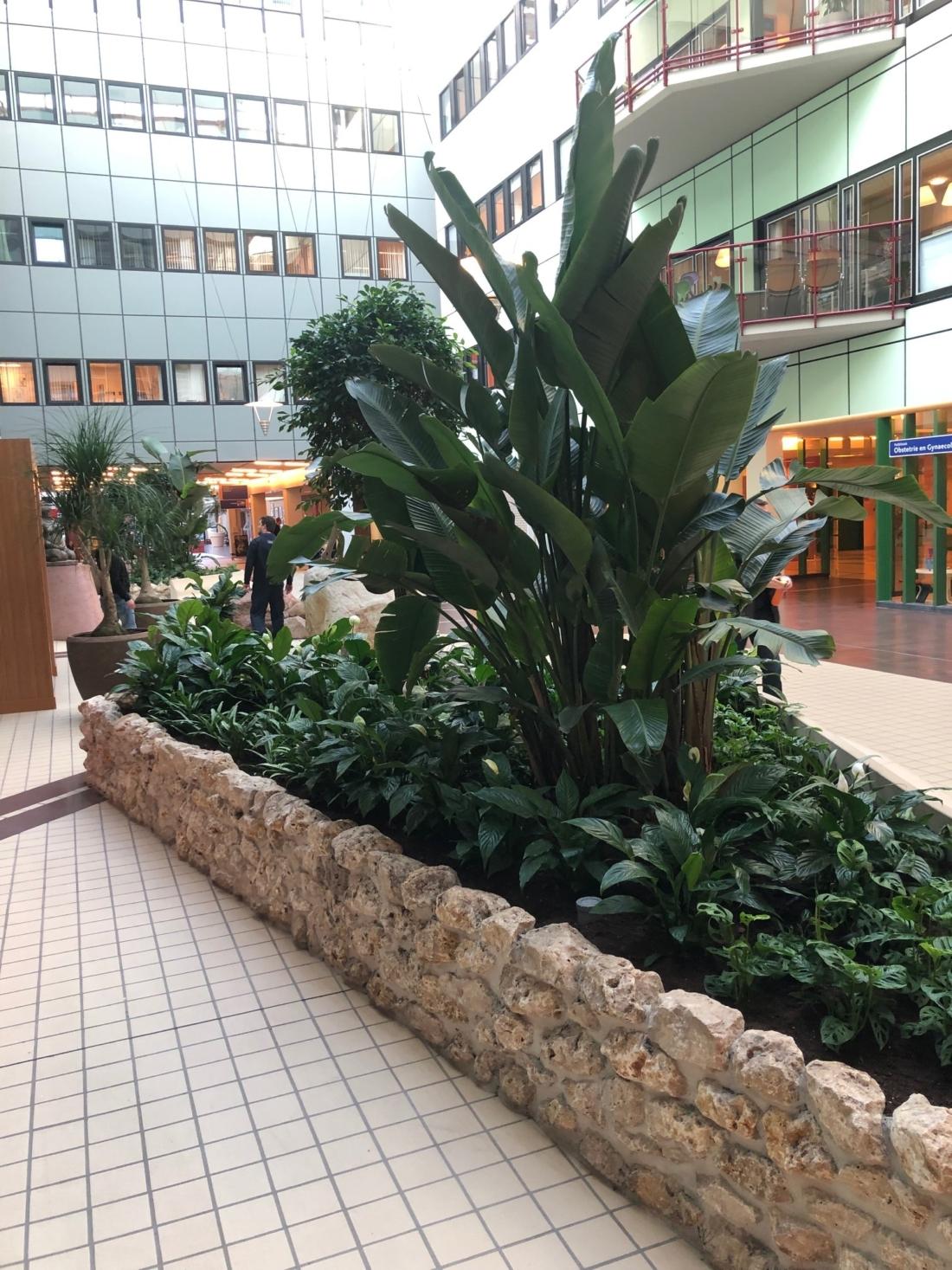 Luxe-beplanting-in-inbouw-plantenbakken-atrium-1100x1467.jpg
