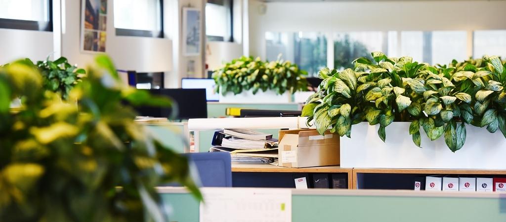 Planten op kast kantoortuin