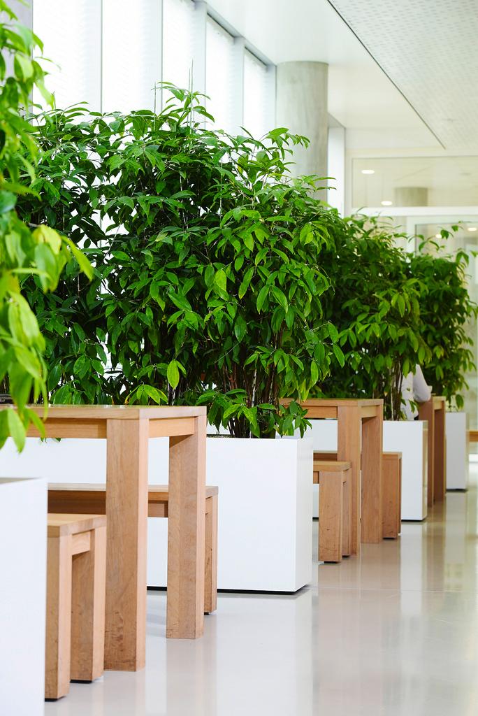 Kantoorplanten-in-rechthoekige-verrijdbare-plantenbak.jpg