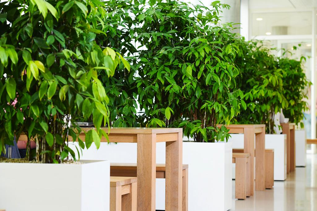 Planten-in-bedrijfsrestaurant-Ten-Brinke-Interieurbeplanting.jpg