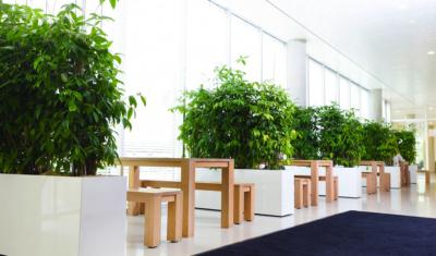 Verrijdbare plantenbak kantoorbeplanting afscheiding