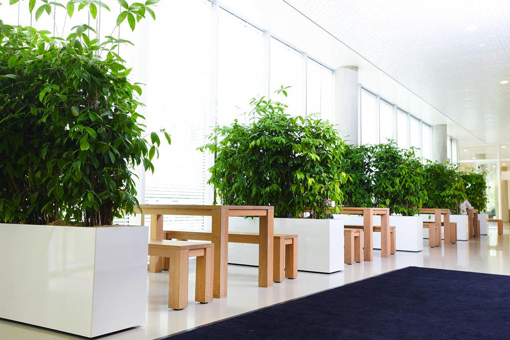 Verrijdbare-plantenbak-kantoorbeplanting.jpg