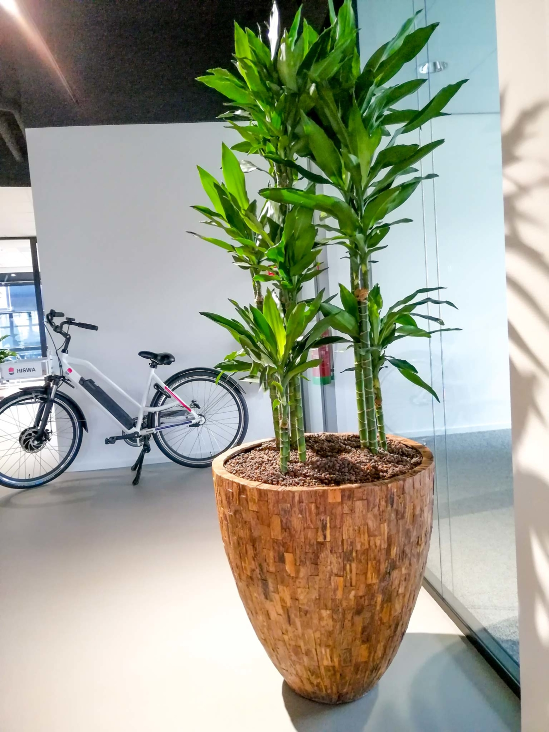 Cemani-wood-plantenbak-met-dracaena-kantoorplant-1100x1467.jpg