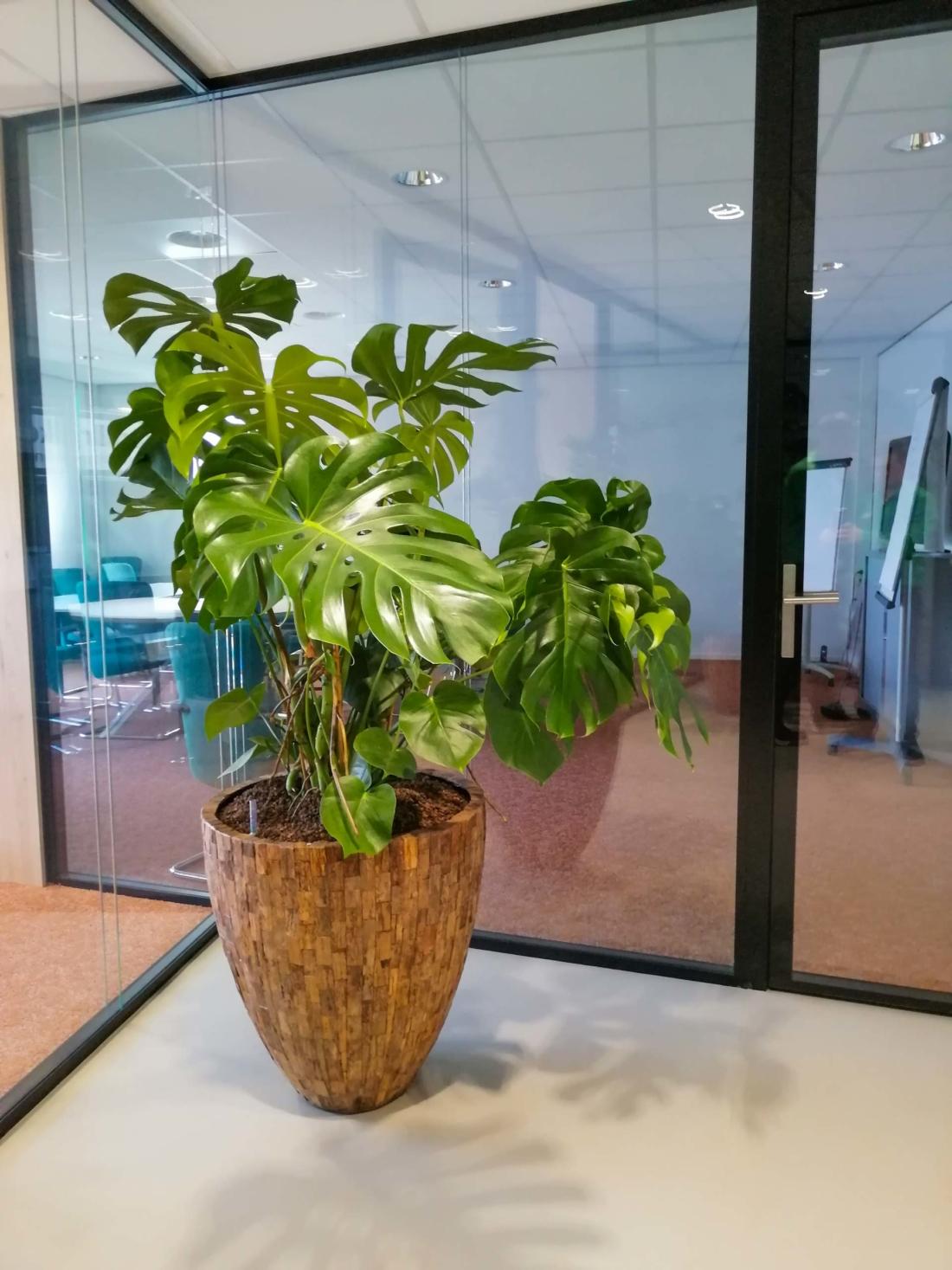 Cemani-wood-plantenbak-met-monstera-plant-1100x1467.jpg