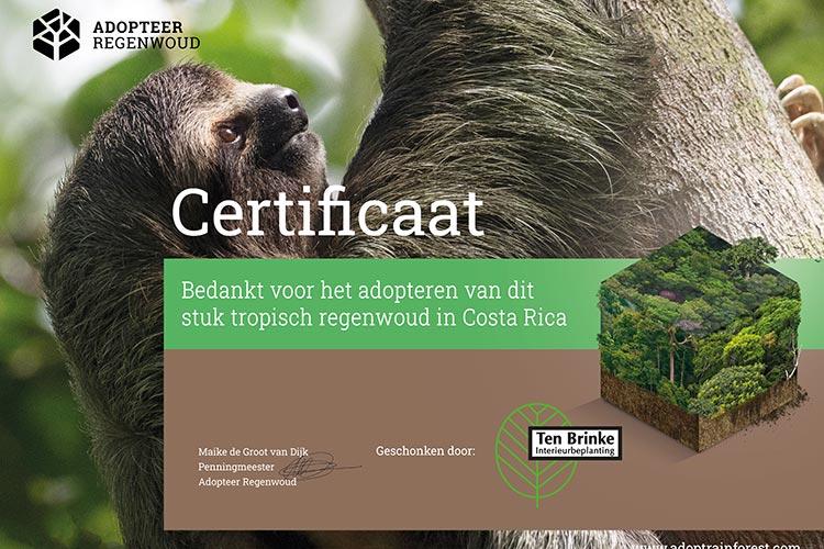 Certificaat adopteer regenwoud