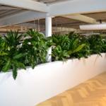 Groene oase van royale beplanting
