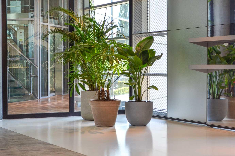 Kantoorplanten met diverse plantenbakken