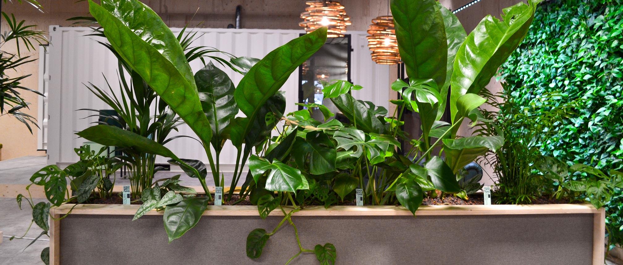 Vernieuwde plantenpaspoort