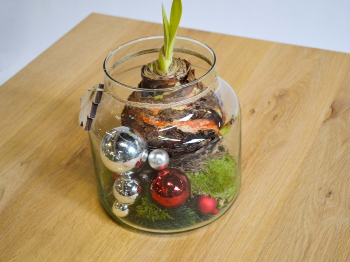 Bowl kerst amaryllis