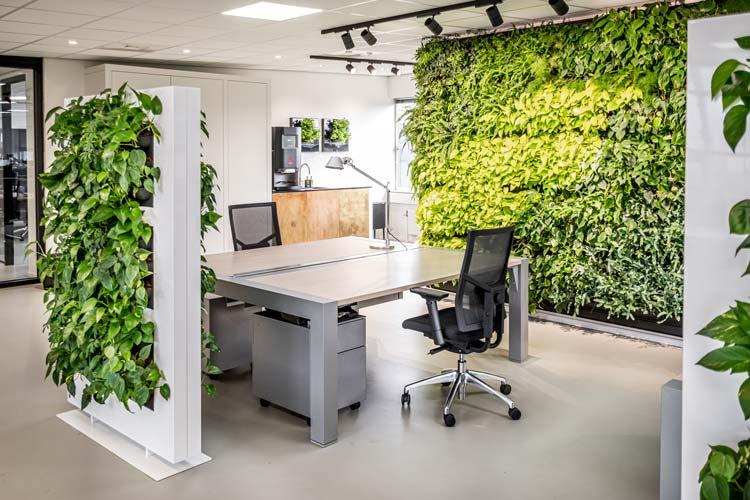 Sfeerafbeelding kantoor planten