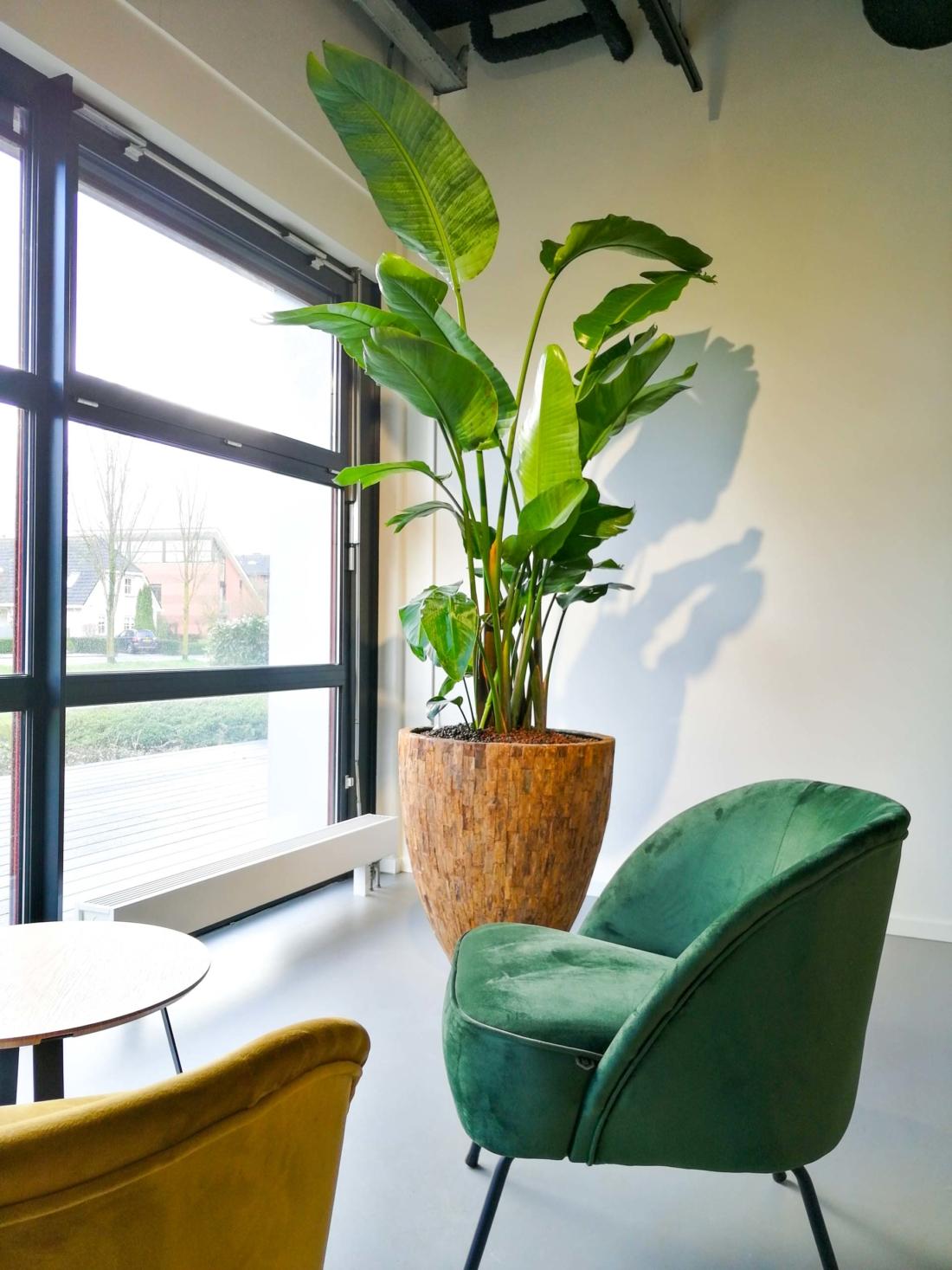 Grote-luchtzuiverende-kantoorplant-met-natuurlijke-look-1100x1467.jpg