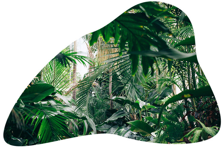 Aarde van de natuur