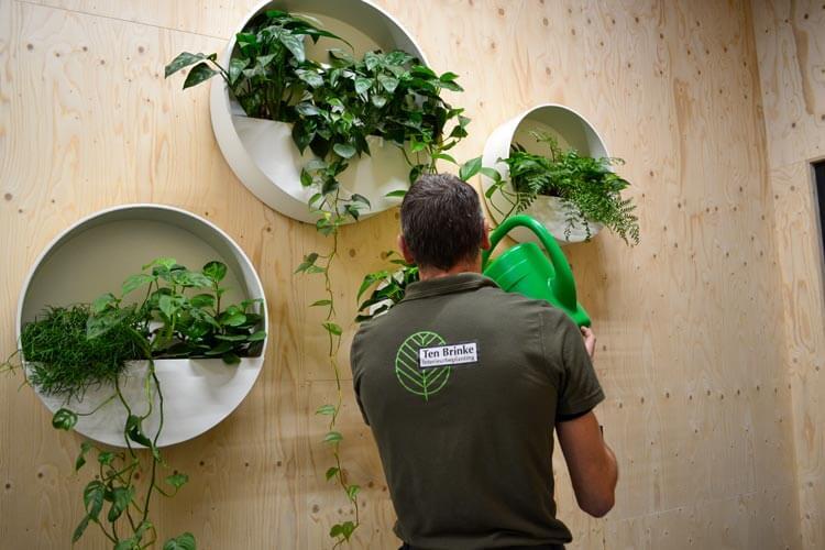 Medewerker interieurbeplanting water geven
