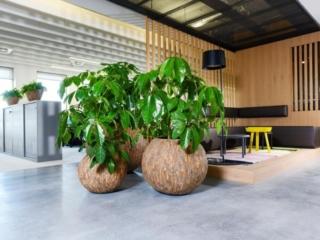 Interieur planten kantoor