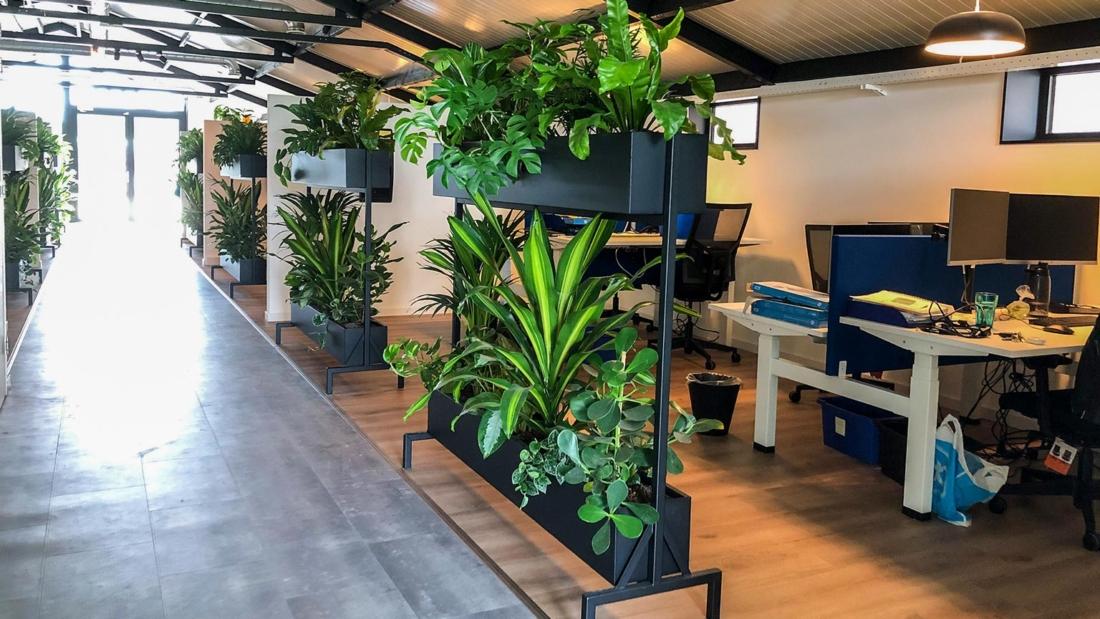Kantoorplanten-afscheiding-werkplek-web-1100x619.jpg