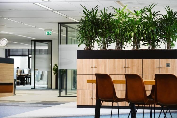Luchtzuiverende kantoorplanten op kast