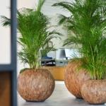 Planten luchtzuiverend Ten Brinke Interieurbeplanting
