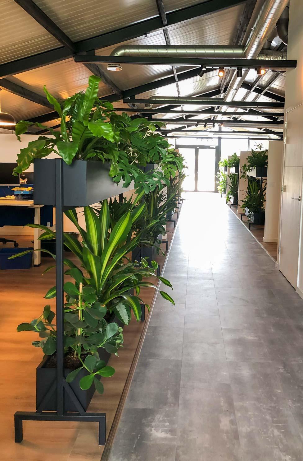 Mynthe-werkplekafscheiding-planten.jpg