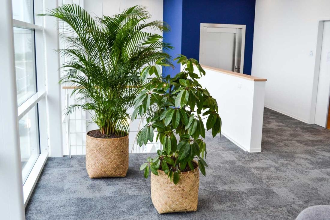 Natuurlijke-look-op-kantoor-1100x733.jpg