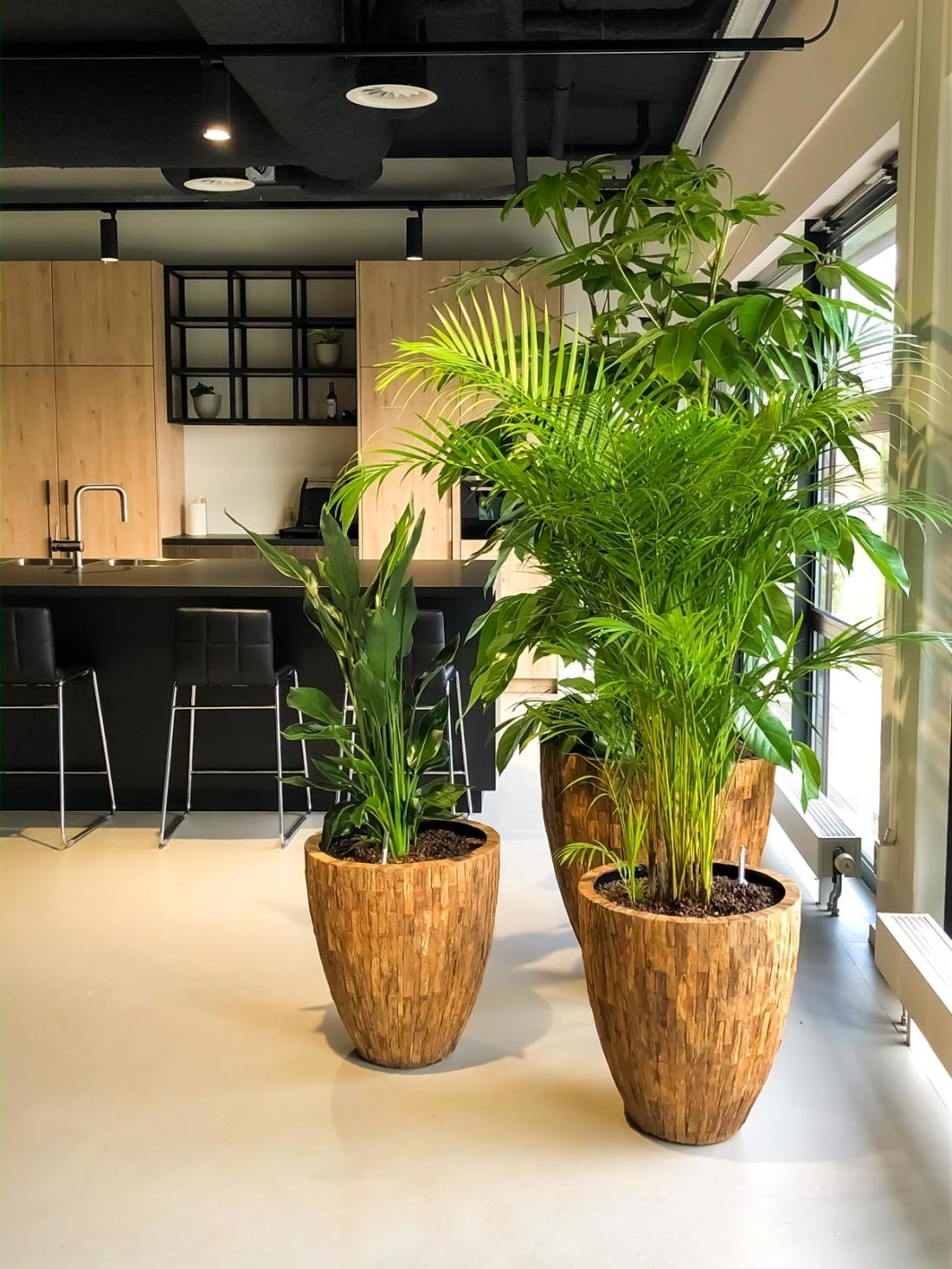 Natuurlijke-plantenbakken-met-diverse-beplanting-1100x1466.jpg