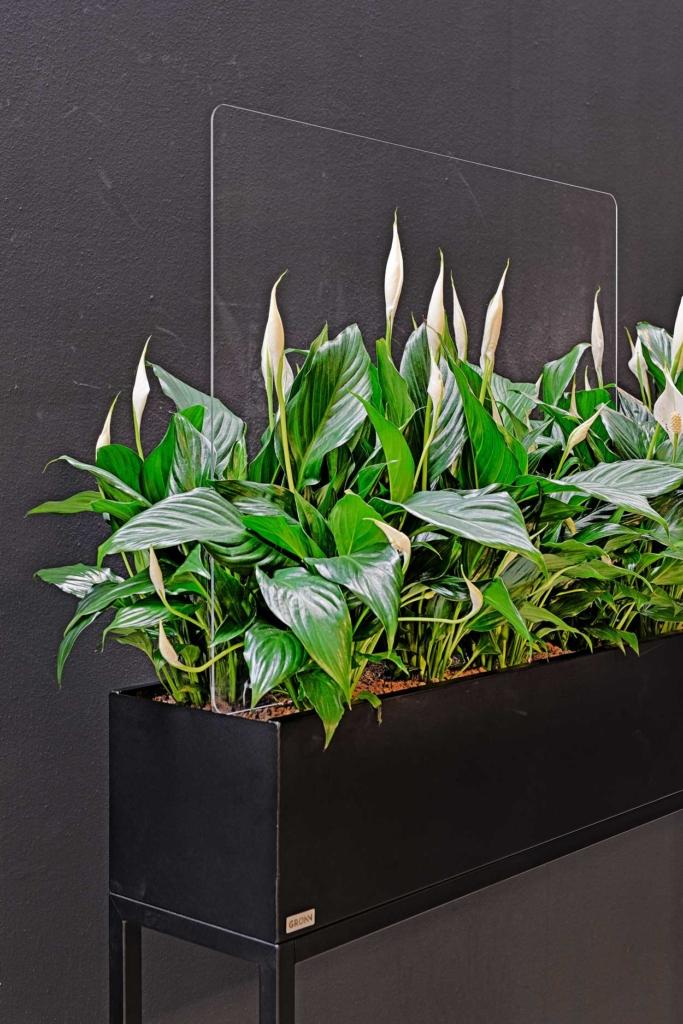 Werkplekafscheiding planten