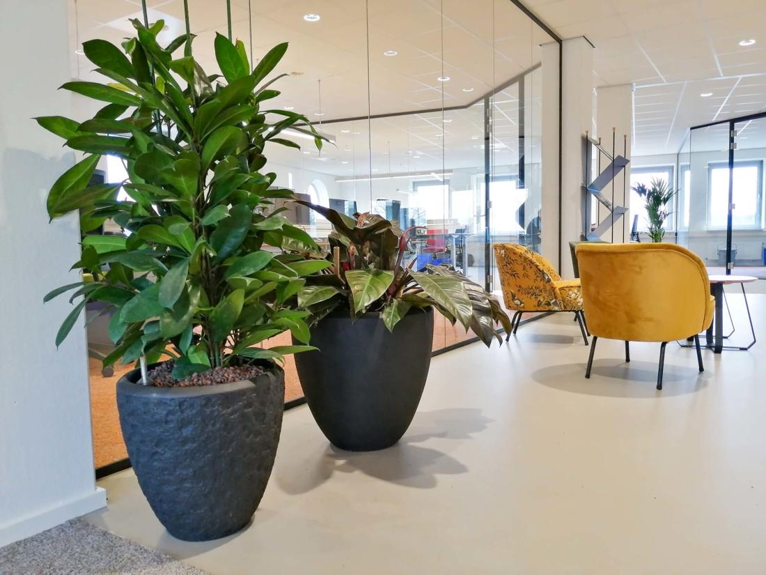 Polystone-plantenbakken-luchtzuiverende-kantoorplanten-1100x825.jpg