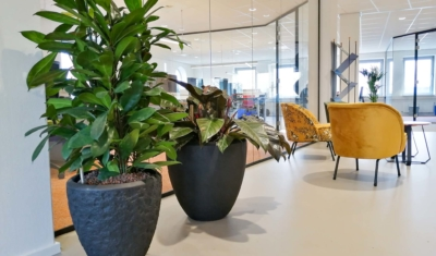 Met luchtzuiverende kantoorplanten
