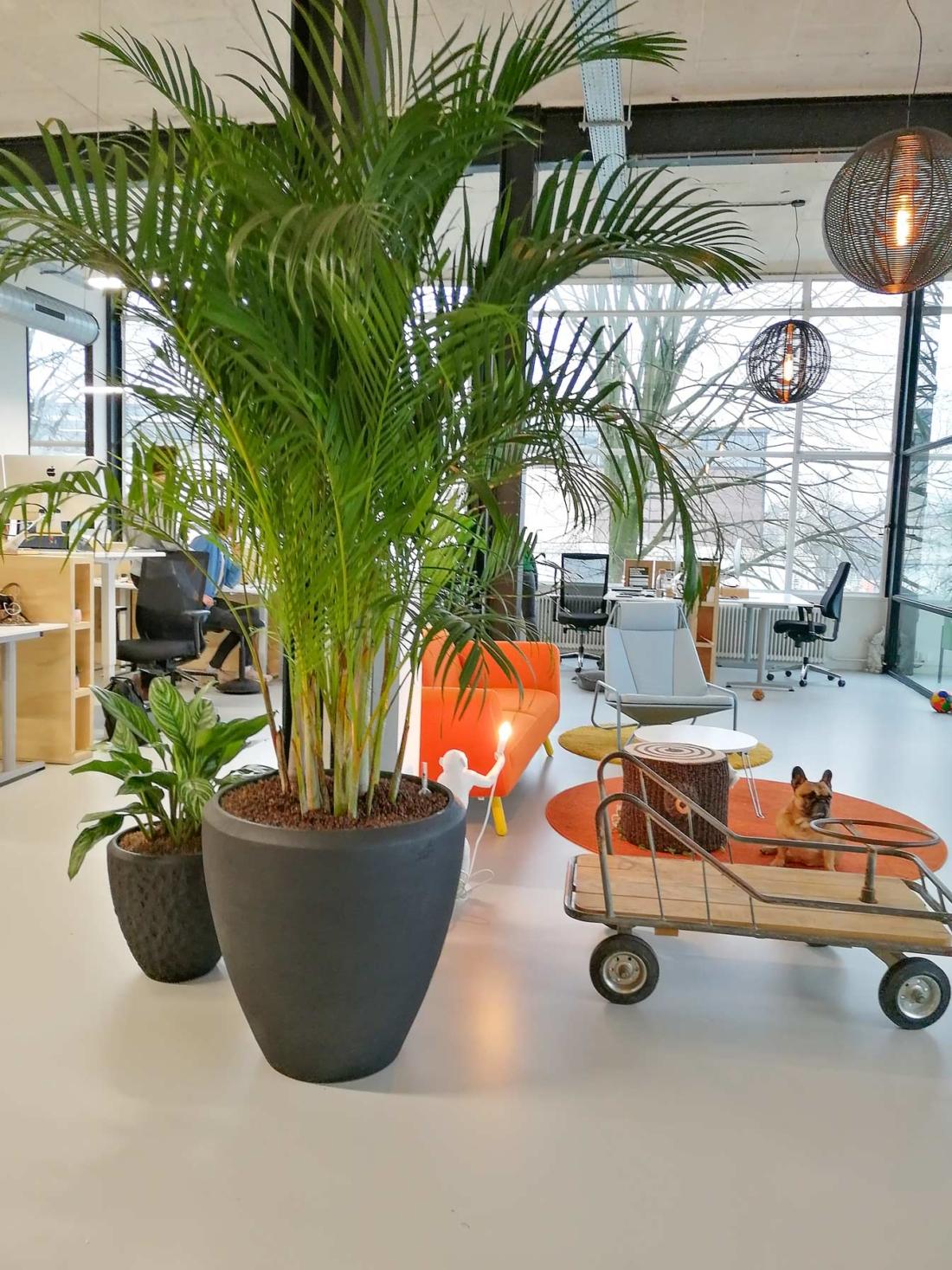 Polystone-plantenbakken-met-tropische-beplanting-kantoor-1-1100x1467.jpg